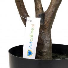 Vioolblad kunstplant 90cm