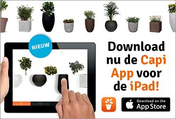 capi app